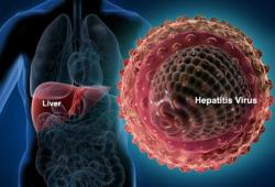 Hepatitis A Vaccine (AVAXIM)