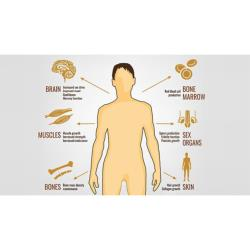 Male Hormone Health