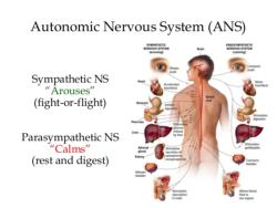 ANS (Analysis of the Autonomic Nervous System)
