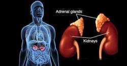 Adrenal Stress Profile