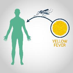 yellow fever vaccines in London - The Wellness Pharmacy