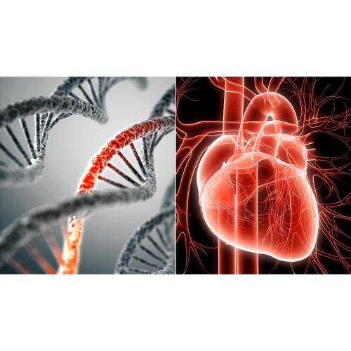 CardioGenomic Plus™  DNA Profile